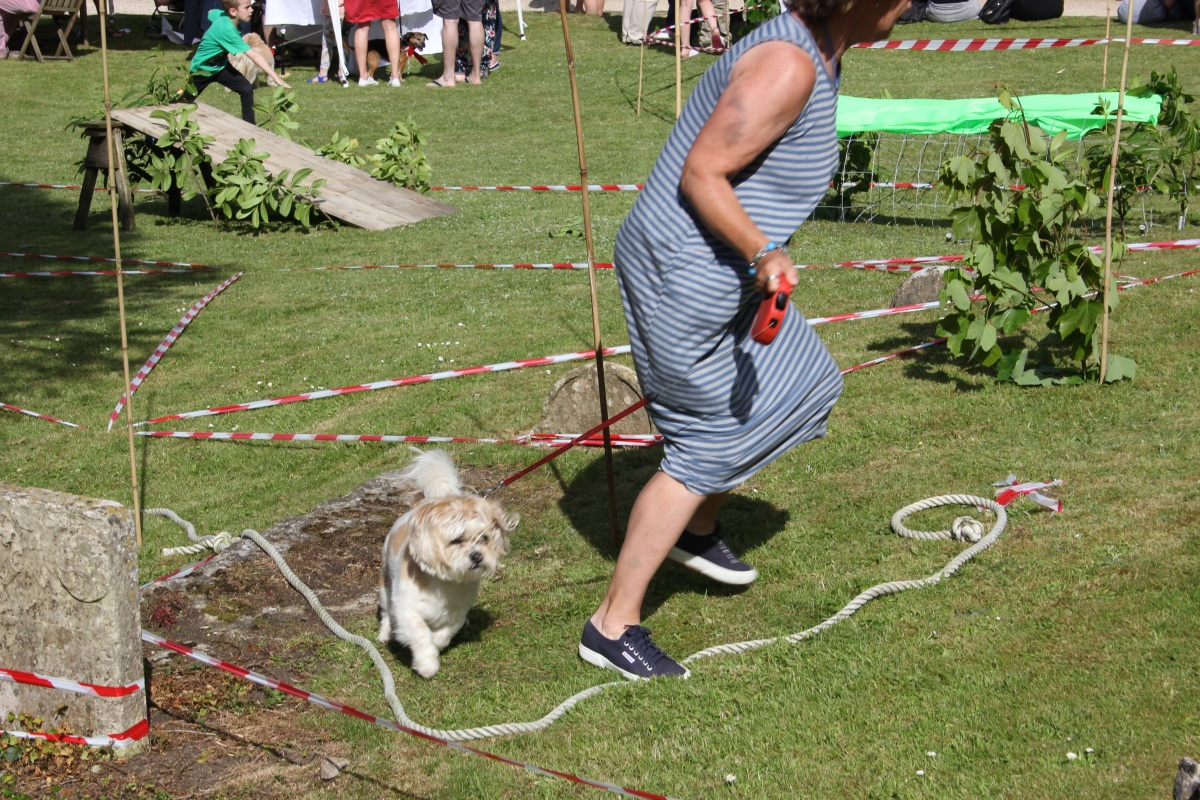 Dog Assault Course